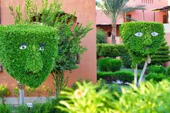 Egypte, Hurghada, September 2015: - Decoratieve bomen en struiken i Stock Foto
