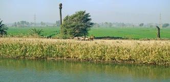 Egypte Oase naast de rivier van Nijl Royalty-vrije Stock Fotografie