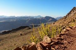 Egypte, Sinai, zet Mozes op Weg waarop de pelgrims de berg van Mozes en bloemen langs de weg beklimmen Stock Foto