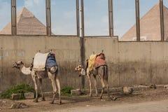 Egypten Kairo NOVEMBER 2012: Giza pyramid Royaltyfria Bilder