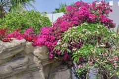 Egypten semesterortområde av Sharm el Sheikh Arkivfoton