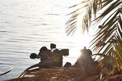 Egypten Siwa oas, havssida, soluppsättning, träd royaltyfri bild