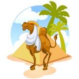 Egyptian camel Stock Photography