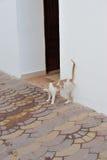 Egyptian cat. Stock Photo