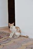 Egyptian cat. Royalty Free Stock Photos