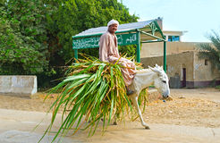 The Egyptian farmer Royalty Free Stock Photos