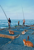 Egyptian fishermen and local cats. Egyptian fishermen making fishing by rods from breakwater of Eastern harbour in Alexandria city,Egypt Stock Photography