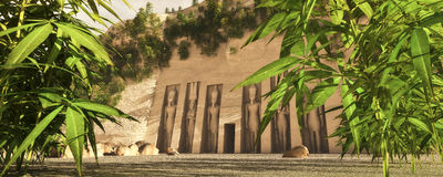 Egyptian green revolution Royalty Free Stock Photo
