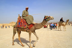Egyptian guide offering to tourists camel ride. GIZA, EGYPT - MARCH 11: Unidentified Egyptian guide offering to tourists camel ride under Great pyramids of Giza Royalty Free Stock Photography