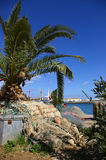 Egyptian harbour. View at Egyptian harbour with palm tree and nest Stock Image