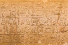 Egyptian hieroglyphics from saqqarah, cairo Royalty Free Stock Photography