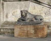 Egyptian Lion Sculpture Vatican Museum Stock Images