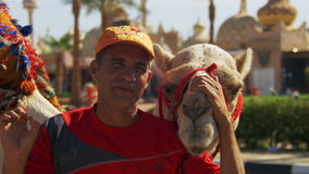 Egyptian Man with Camel near the Tourist Place stock footage