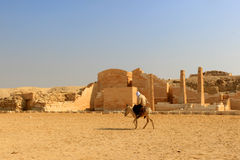 Egyptian man on donkey back  at Saqqara Stock Photography