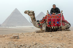 An Egyptian man and his camel in front of the Giza pyramids in Egypt. Late afternoon in the Sahara Desert as a man rests against his camel with the Pyramids of Stock Photos