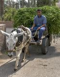 An Egyptian man riding on an cart being driven by a donkey at Saqqara in Egypt. Royalty Free Stock Photos