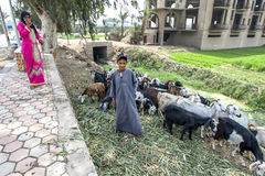 An Egyptian mother and son graze their herd of goats next to the roadside near Memphis in northern Egypt. Royalty Free Stock Photo