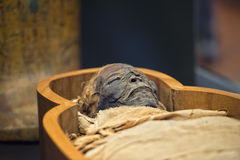 Egyptian mummy Royalty Free Stock Photo
