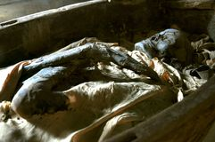 Egyptian mummy in a museum. Egyptian mummy in a coffin in a mueum in Florence, Italy Royalty Free Stock Photo