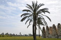 Egyptian Natural Fields. Some of Palms in Sharkia with blue sky and green Field Stock Photo
