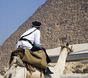 egyptian policeman on camel guards the pyramid in Giza Egypt Stock Images