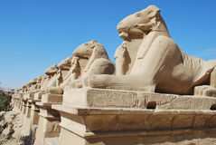 Egyptian Row of Sphinxes. This is the picture of an ancient egyptian row of sphinxes in Karnak, Luxor Stock Image