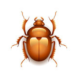 Egyptian scarab beetle  on white vector Royalty Free Stock Photography