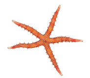 Egyptian sea star Stock Photo