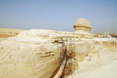 Egyptian sphinx in Cairo is being restaured Stock Image