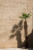 Egyptian temple with palm tree Royalty Free Stock Image