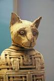 Egyptier Cat Mummy royaltyfri fotografi