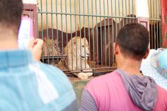 Egyptier som ser lejonet royaltyfri bild