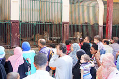 Egyptier som ser lejonet royaltyfri fotografi