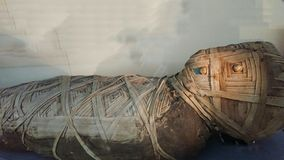 Egyption Mummy royalty free stock image