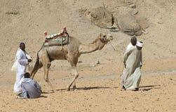 Egyptische Cameldrivers 1 Royalty-vrije Stock Afbeeldingen