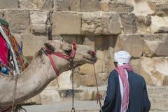 Egyptische Kameel bij Giza-Piramidesachtergrond Toeristische attractie - Stock Foto