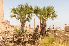 Egyptische obelisk tussen twee palmen in de ruïnes van Karnak-tempel, Luxor, Egypte royalty-vrije stock fotografie