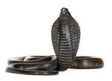 egyptisk hajenaja för kobra Royaltyfri Fotografi