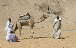 egyptiska cameldrivers 1 Royaltyfria Bilder