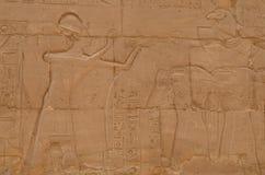 Egyptiska Carvings på tempelet av Luxor Arkivbild