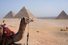 Egyptiska pyramider med en kamel på bakgrunden royaltyfri fotografi