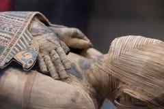 Egyptiskt mammahuvudslut upp Fotografering för Bildbyråer