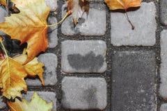 Egzamin próbny Jesień chodnikowa koloru żółtego liście zdjęcia stock