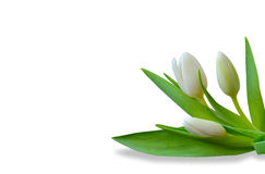 Egzamin próbny up z tulipanami Obrazy Royalty Free