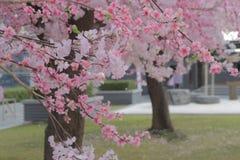 Egzamin próbny w górę Sakura dla tła Zdjęcie Royalty Free