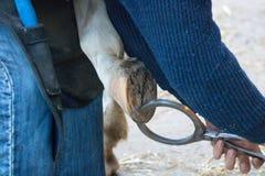 Egzamininuje chorego konia patrzeć i taktować kopyta Obrazy Royalty Free