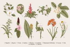 Egzotów kwiaty ustawiający Botaniczna wektorowa rocznik ilustracja ilustracji