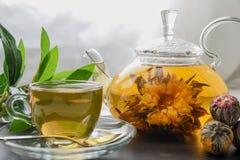 egzot kwitnie zielonej herbaty szklanego teapot zdjęcie stock