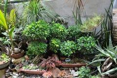 Egzot rośliny wystawiać w przesłankach Mr Aleksander dela Wiktoria ` s siedziba przy Matanao, Davao Del Sura, Filipiny zdjęcia stock