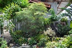 Egzot rośliny wystawiać w przesłankach Mr Aleksander dela Wiktoria ` s siedziba przy Matanao, Davao Del Sura, Filipiny obraz stock